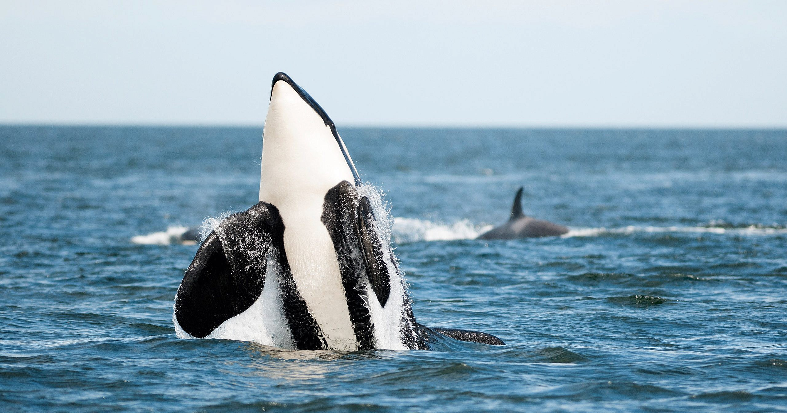 Image result for whale watching