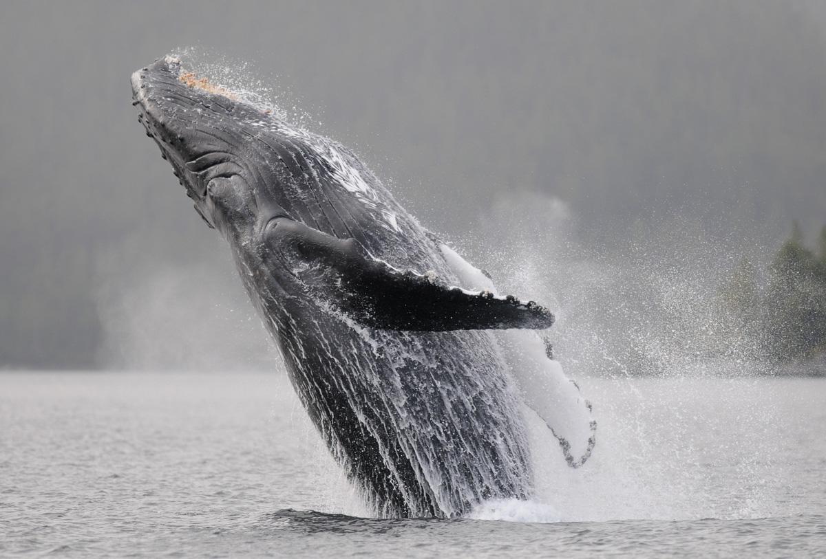 Conservation Interpretation Vancouver Island