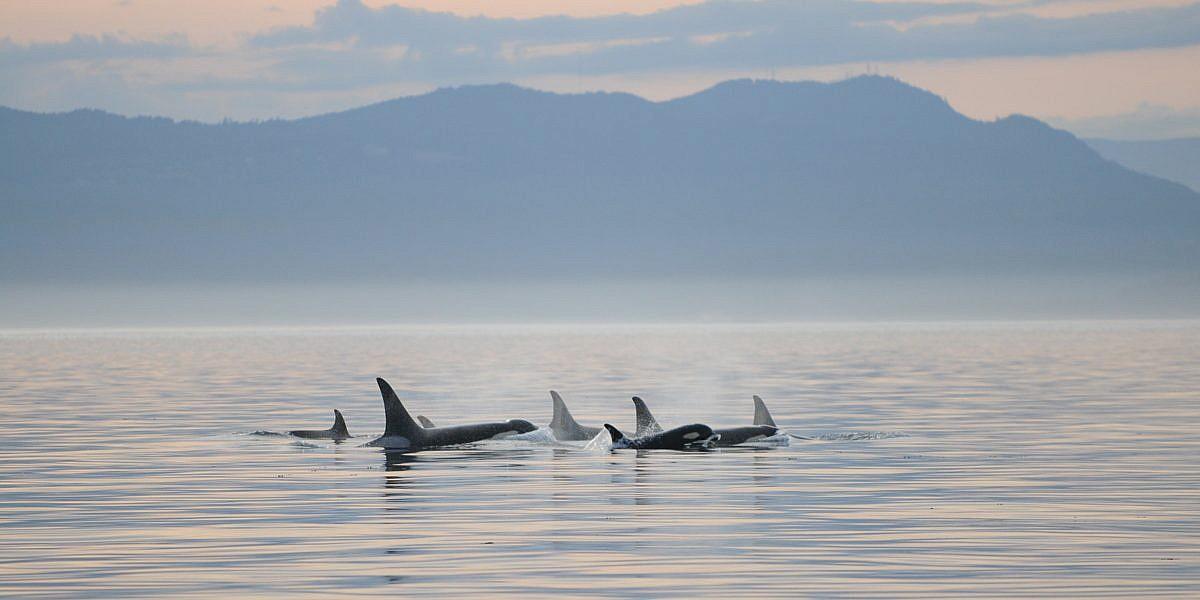 Orca Tours Vancouver