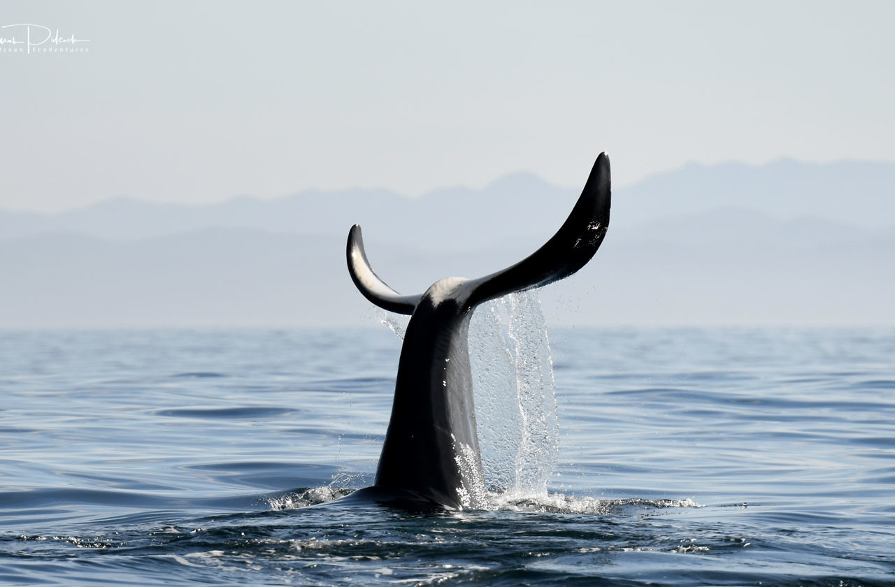 Private Half Day Whale & Wildlife Charter