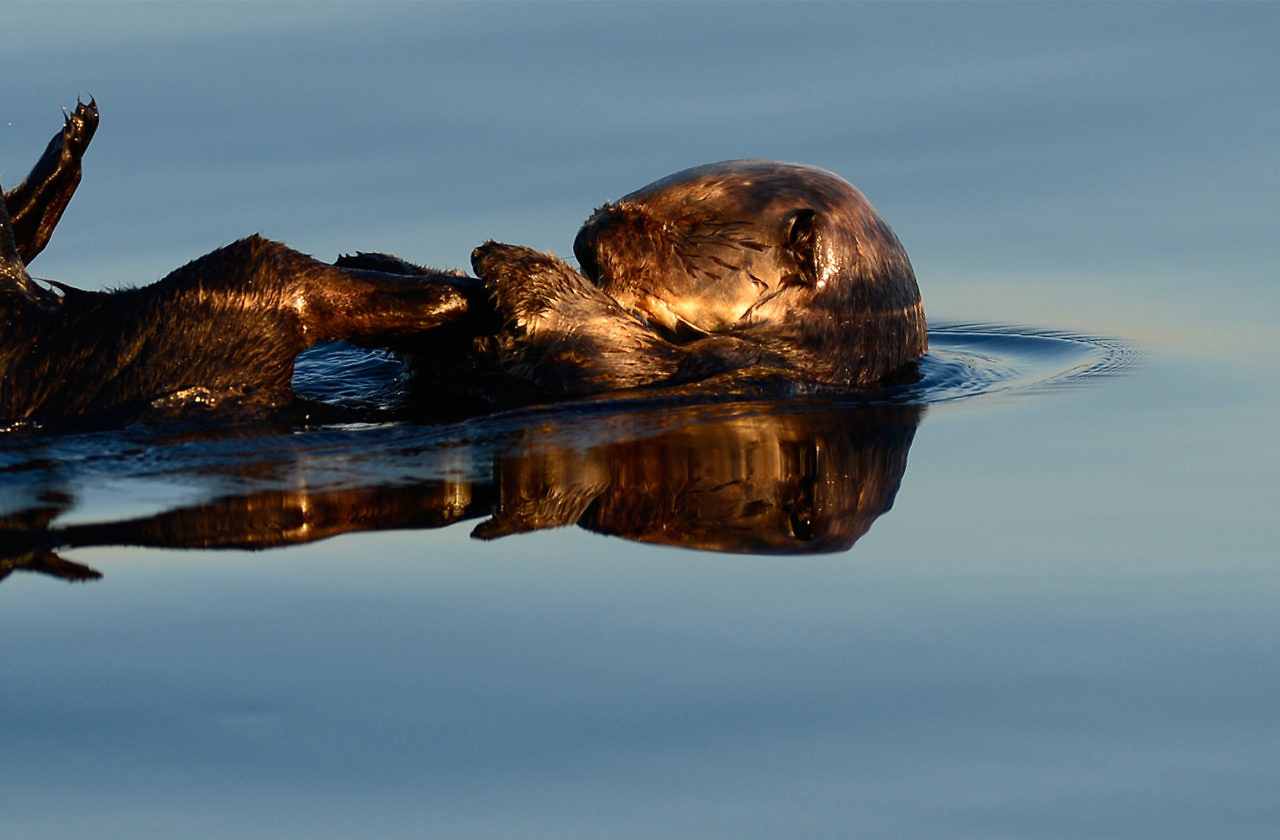 Sea Otters, Whales, Wolves & Bears Expedition – Nootka Sound Vancouver Island