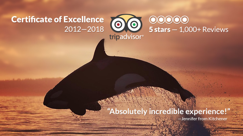 TripAdvisor Certificate of Excellence 2012-2018. 5 stars. 1000+ reviews.